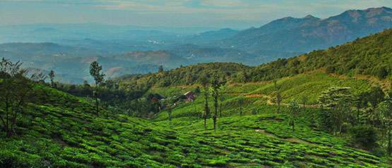 Important Tourist Places in Wayanad